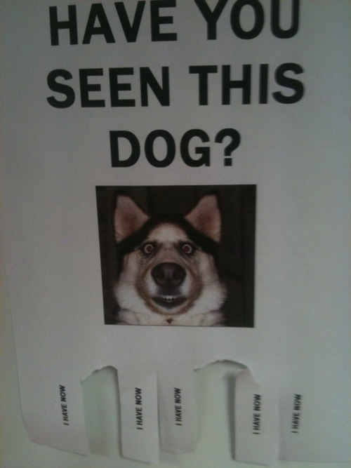 Have you seen this dog? I have now