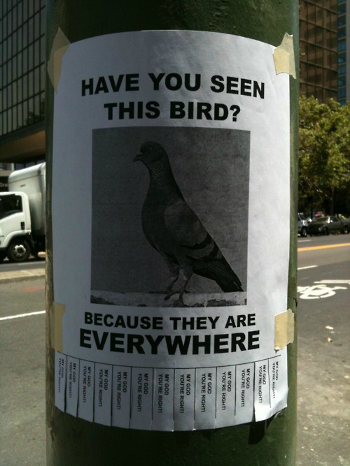 Have you seen this bird? Because they are everywhere!