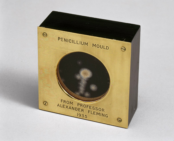 Sample_of_penicillin_mould_presented_by_Alexander_Fleming_to_Douglas_Macleod_1935_(9672239344)