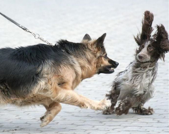 Dog scaring another dog