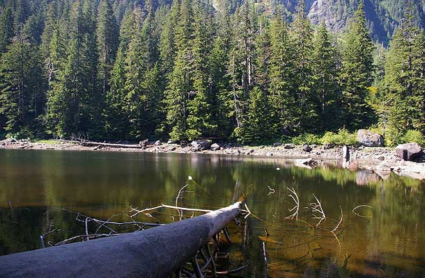 Barclay lake with log in foreground