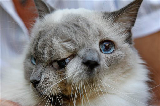 Frank and Louie, the two faced cat