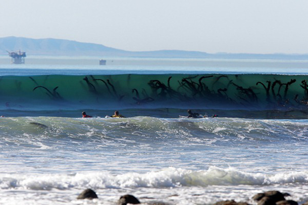 Sea weed in a wave