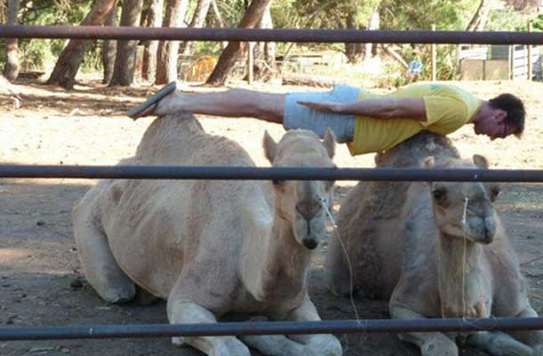 planking on two camels
