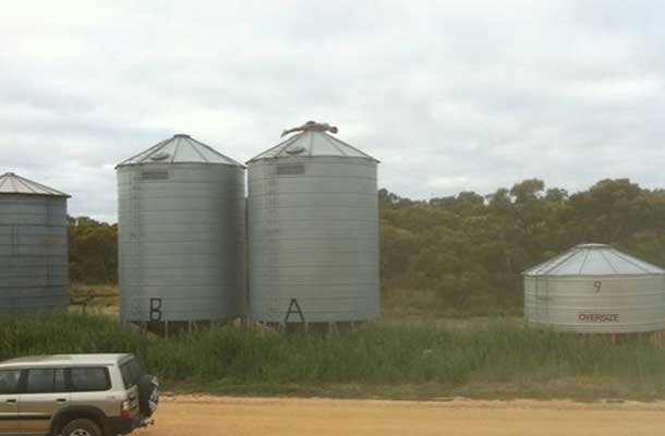 planking on top of a silo