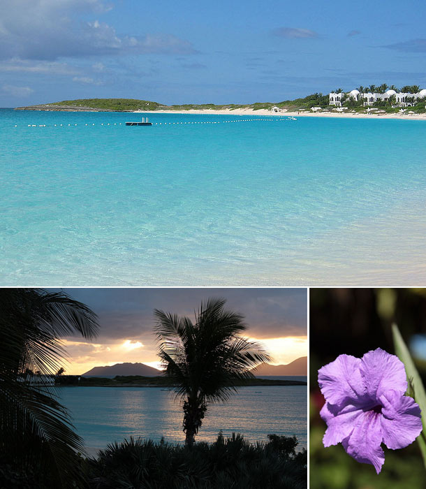 Image collage of Anquilla including clear blue beach, tropical sunset, and purple flower