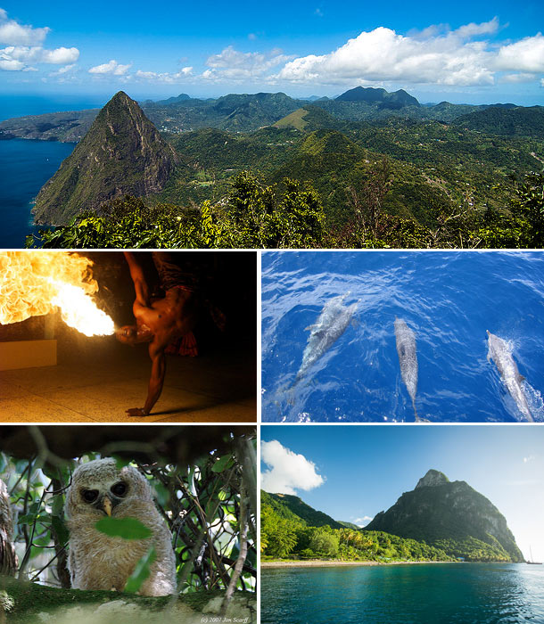 Image collage of St. Lucia including a sky view of green mountains, fire dancer, swimming dolphins. owl, and mountain beach