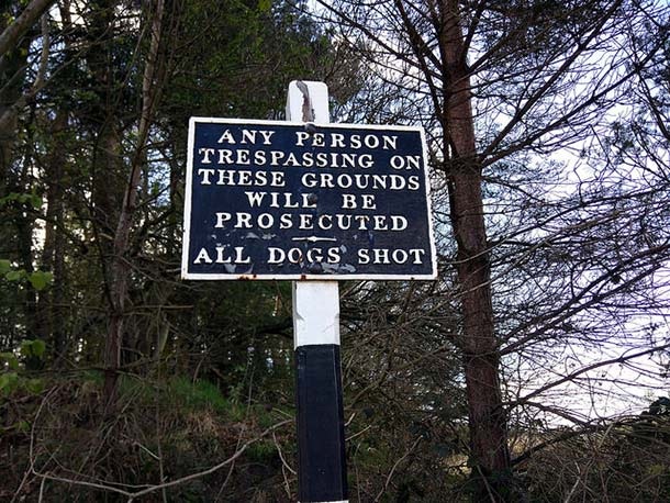 all dogs shot