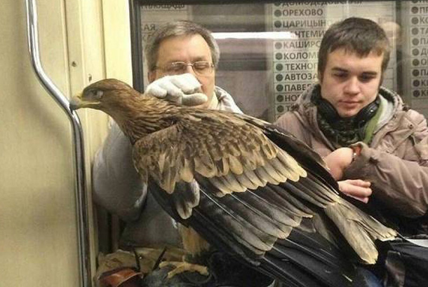 man with hawk perched on his hand