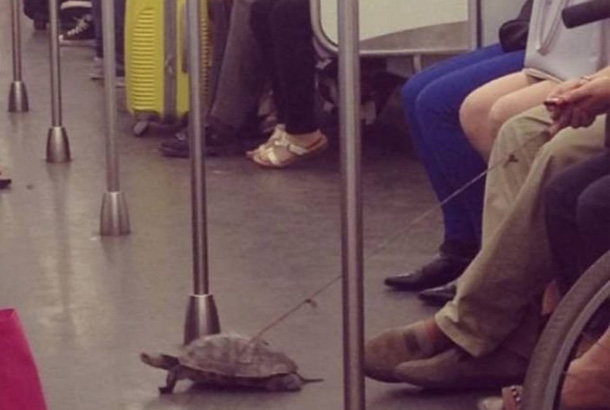 man sites with turtle on floor tied to a string