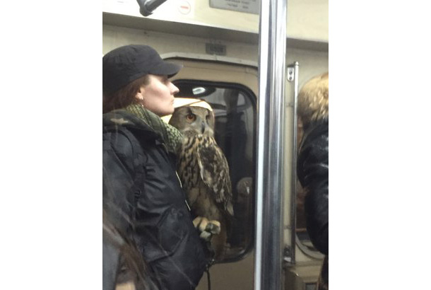 woman stands with large owl perched on her hand