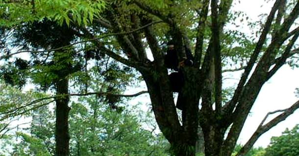 Ninjas Rest On Top of the Trees