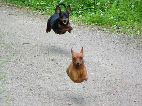 Hover Animals