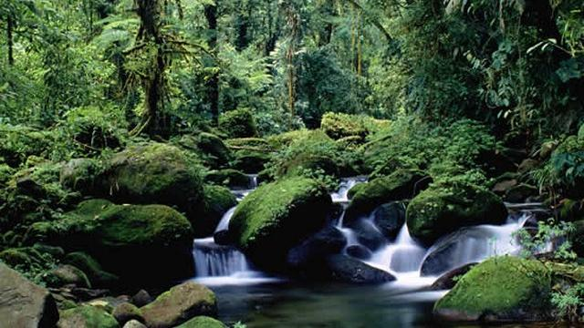 21 Cloud Forests_tn