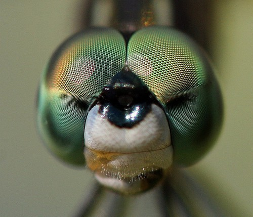 2 insect_tn