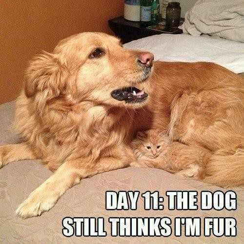 http://www.funnymemes.com/tag/cat-meme/page/2/