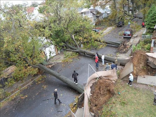 6 toppled down trees_tn