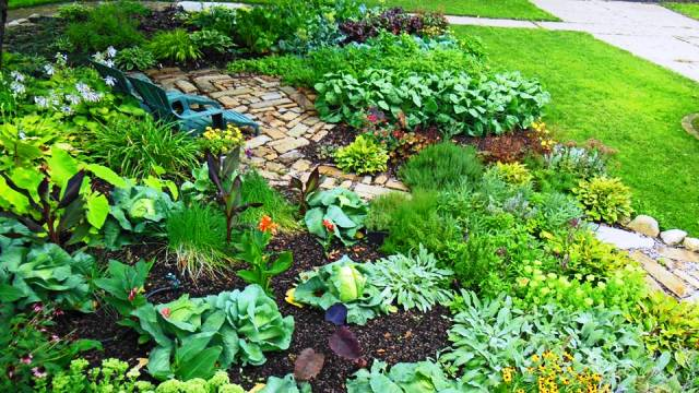 Plant a wide array of organic fruits and vegetables
