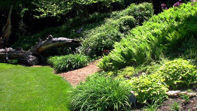 Fill your garden with foliage plants