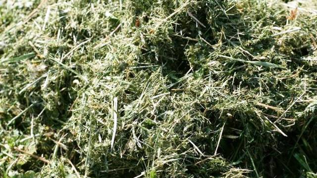 Leave grass clippings on the lawn when mowing