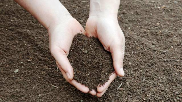 Add compost to your soil