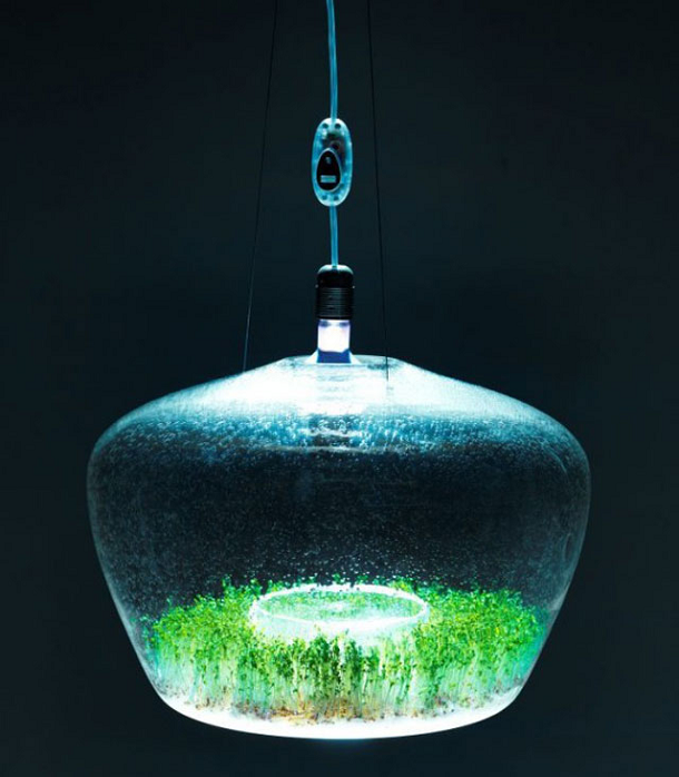 Suspended Glass Greenhouse Lamp
