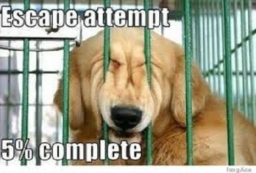Funny dog image with words saying escape attempt 5% complete