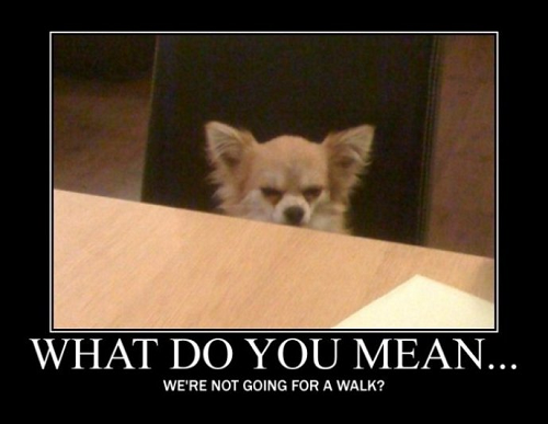 Funny image of chihuahua at table with words saying what do you mean