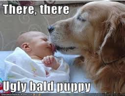 Image of Labrador dog licking baby's face with words saying There, there ugly bald puppy