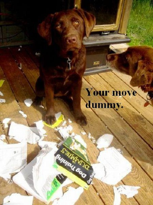 Image of chocolate lab with words saying your move dummy