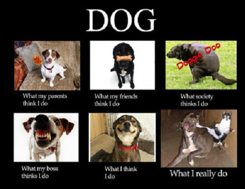 Image, several types of dogs