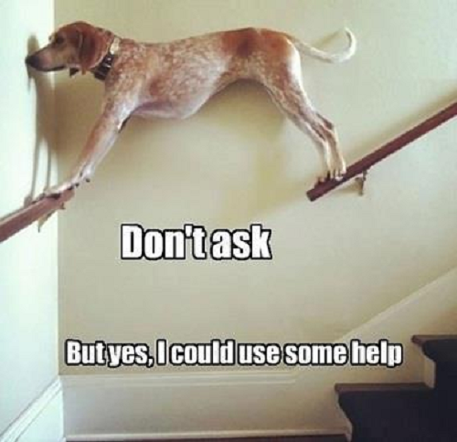 Image of dog on stair rails with words saying Don't ask but yes i could use some help