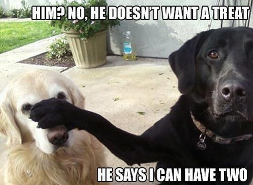 Image of dogs and words saying no, he doesn't want a treat