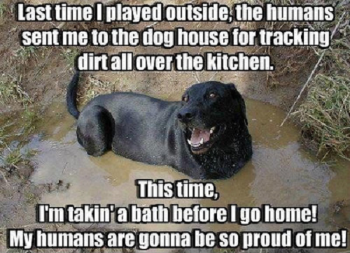 Image, dog saying last time I was outside the humans sent me to the dog house