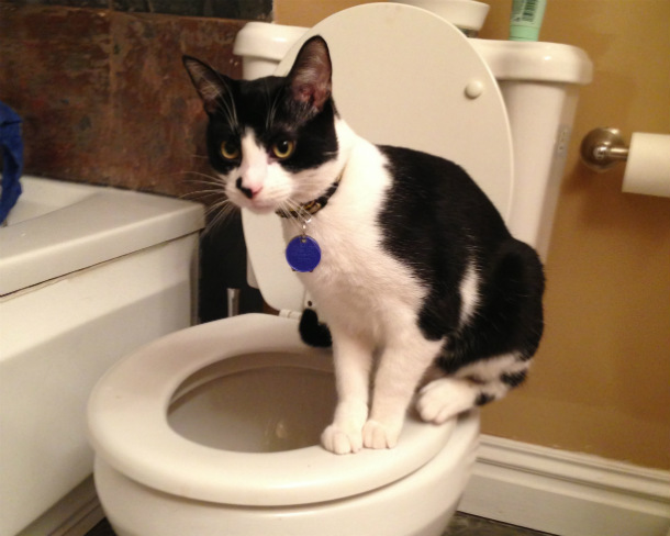 Black_and_white_cat_on_toilet_seat