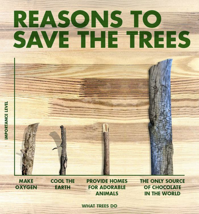 Reasons-To-Save-Trees