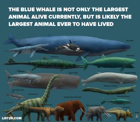 bluewhale3