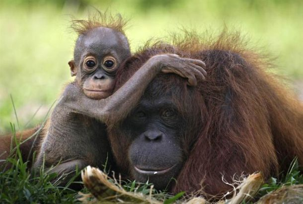 25 Tender Photographs Of The Beautiful Bond Between Animals And Their Babies