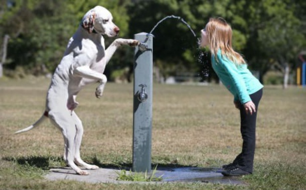 www.gagbay.com smart_dog_giving_master_girl_a_drink_from_a_water_fountain-151590