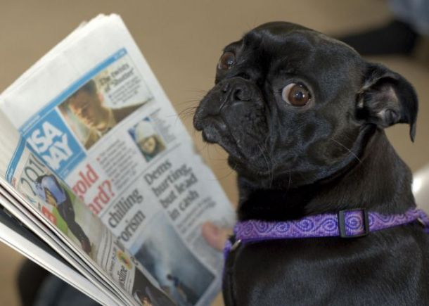 www.yourdogpictures.com 0000000264-c6be2ceb7751293c11c052798371155a-dog-reading-newspaper