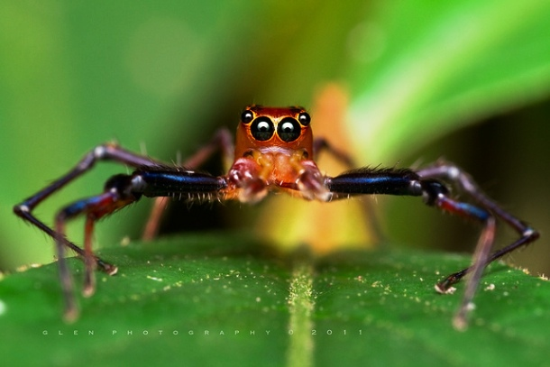 25 Adorable Spiders That Are Not As Scary As You Think