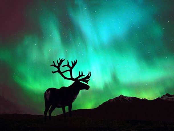 environment.nationalgeographic.com caribou-northern-lights_104_600x450
