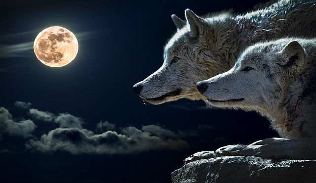 hour wolf