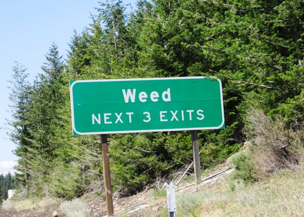 whitelines.com Weed-Road-Sign1
