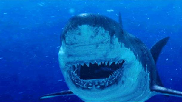 www.discovery.com 126574207742812864201301197_103Megalodon