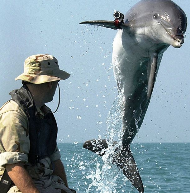 852px-NMMP_dolphin_with_locator