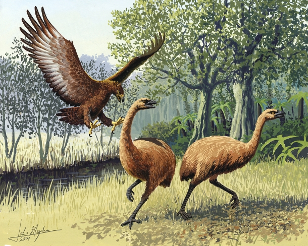 en.wikipedia.org Giant_Haasts_eagle_attacking_New_Zealand_moa