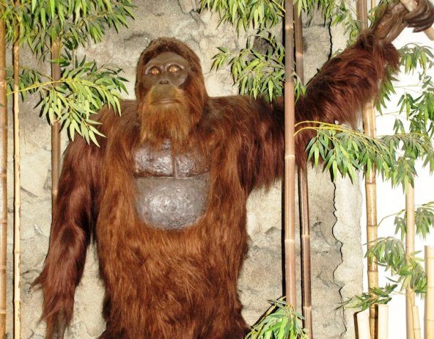 www.smithsonianmag.com how-gigantopithecus-became-extinct-768-1024.jpg__800x600_q85_crop_subject_location-292,387