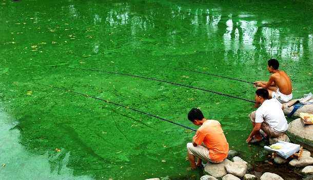 polluted river covered with algae in Hefei