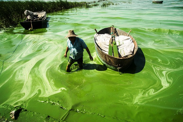 lake covered with green algae in the Anhui Province